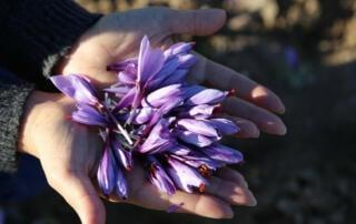 Wuerzen ist gesund mit Safran aus der Natur