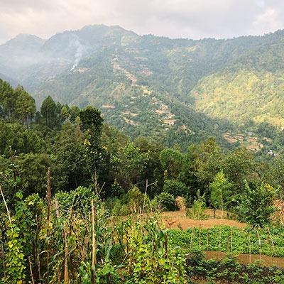 Würzen mit Schwarzer Kardamom aus der Natur in Nepal